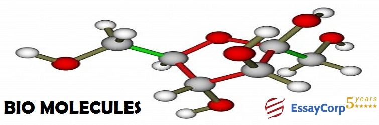what are biomolecules and why are they so important