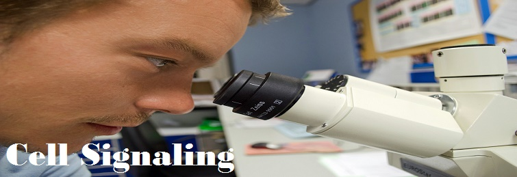 Cell Signaling – Know Cell Signaling In Detail By EssayCorp Experts.