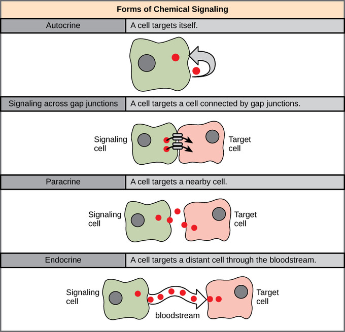 Cell Signaling- EssayCorp