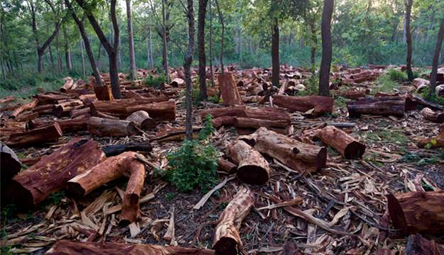 Cause Of Deforestation- By EssayCorp