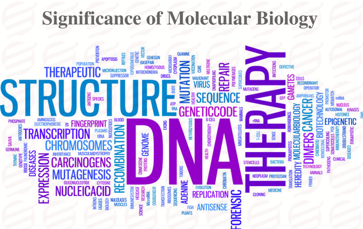 significance of molecular biology