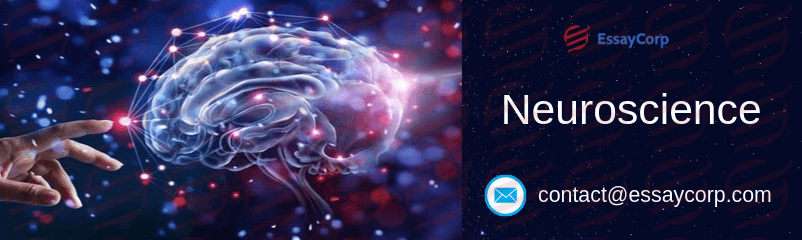 What Is Neuroscience All About? | EssayCorp